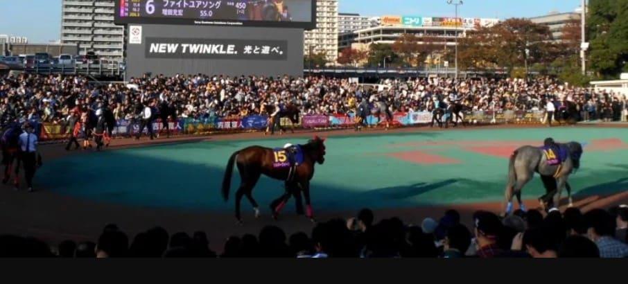 地方競馬 代表馬